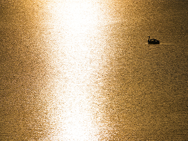 中禅寺湖とスワンボート