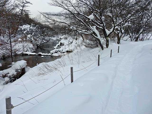 雪景色 0117 17  戦場ヶ原 (44).jpg
