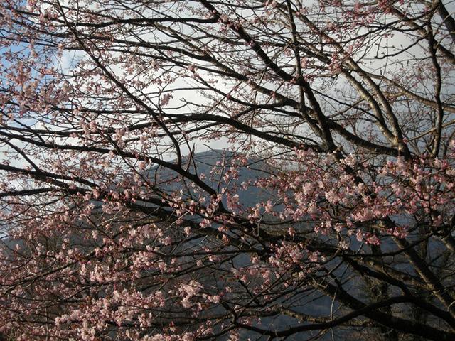 180426中禅寺桜.jpg