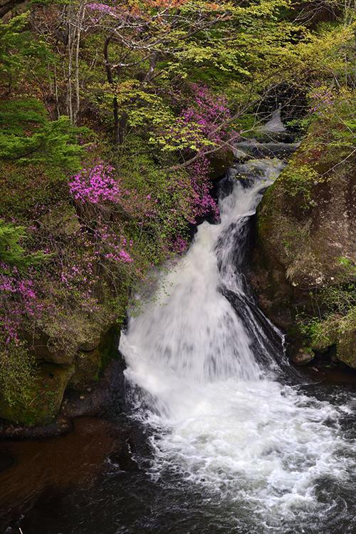 180517竜頭の滝トウゴクミツバツツジ-2640.jpg