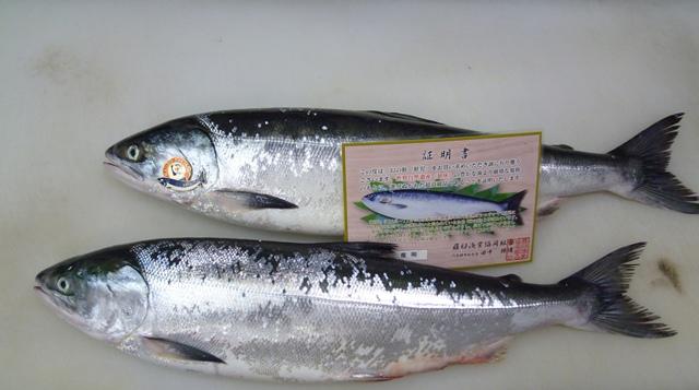 幻の鮭「鮭児」