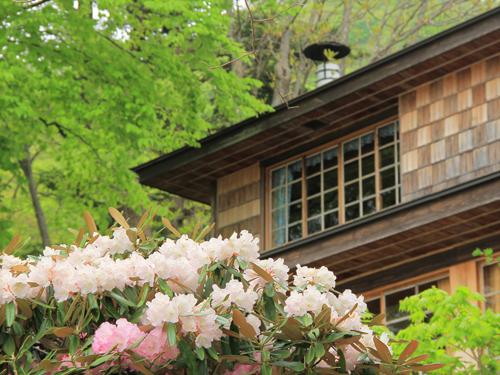 アズマシャクナゲ/イタリア大使館別荘記念公園本邸