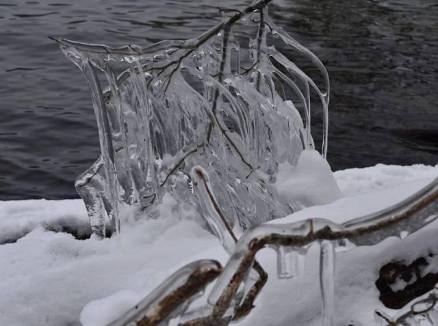 しぶき氷成長中