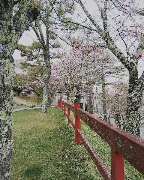 中禅寺湖周辺のお花の状況について
