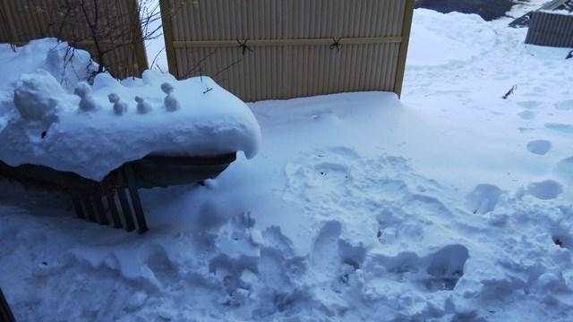 密かな場所に雪だるまが..!