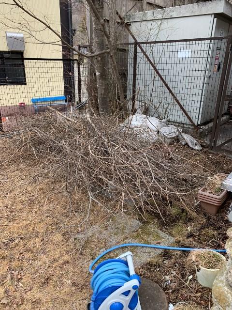 木の伐採をしました!