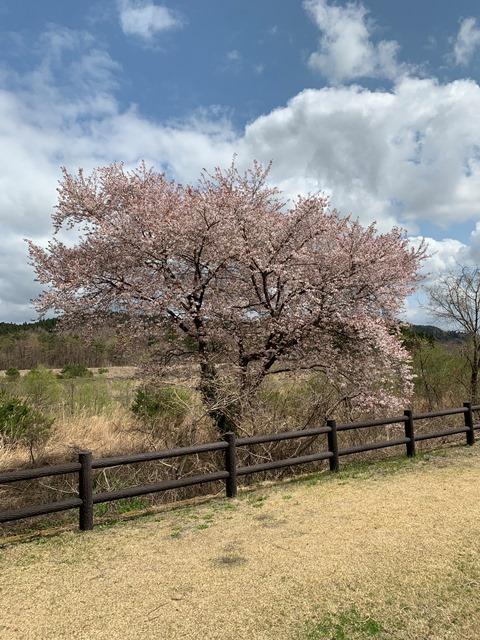 日光だいや川公園のお花が満開でした