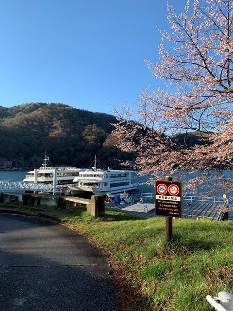 中禅寺湖も桜が咲き始めました