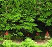 日光植物園イメージ